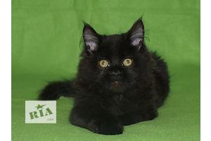 бу Кошки, коты, котята в Одессе Вся Украина