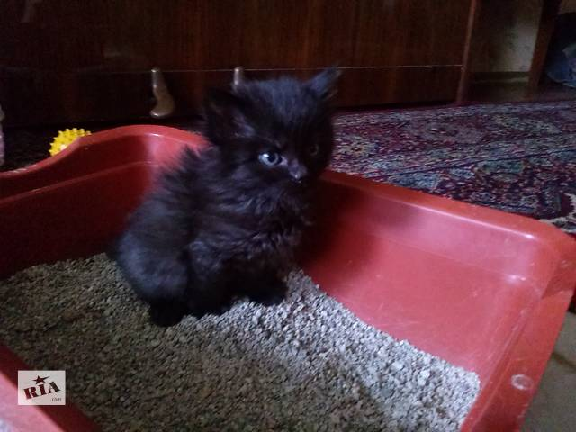 продам котенок в дар  бу в Броварах