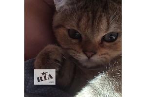 продам Кошки, коты, котята в Днепропетровске бу Днепропетровск