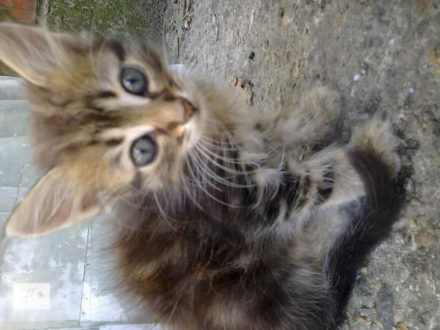 купить бу котенок в Днепре (Днепропетровск)