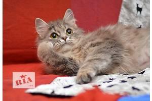 Котенок Рыська в пушистой шубке