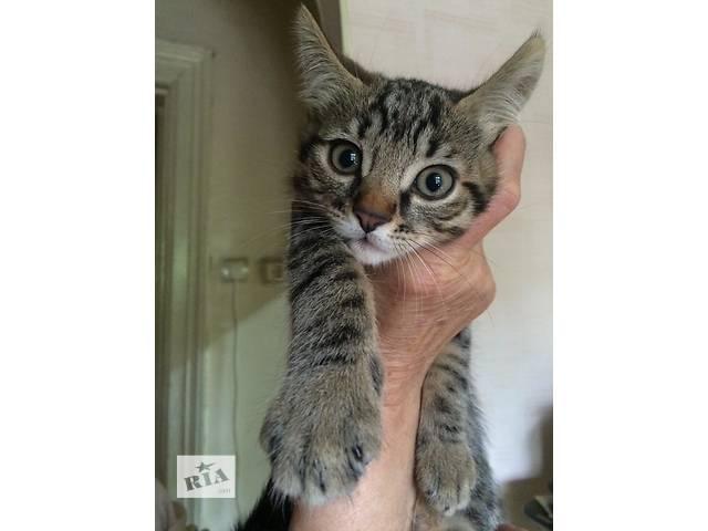 Котенок. Качественный. Лечебно-профилактический- объявление о продаже  в Одессе