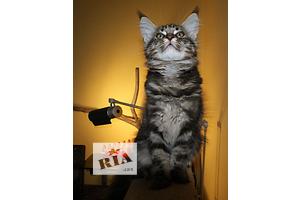 купить бу Кошки, коты, котята в Одессе Вся Украина