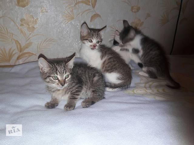 купить бу Котята от домашней кошки бесплатно в Шостке
