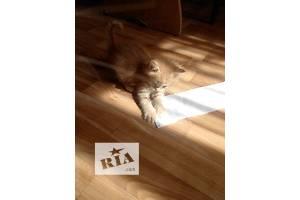 котята ищут новых хозяев