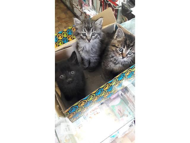 Котята- объявление о продаже  в Донецке