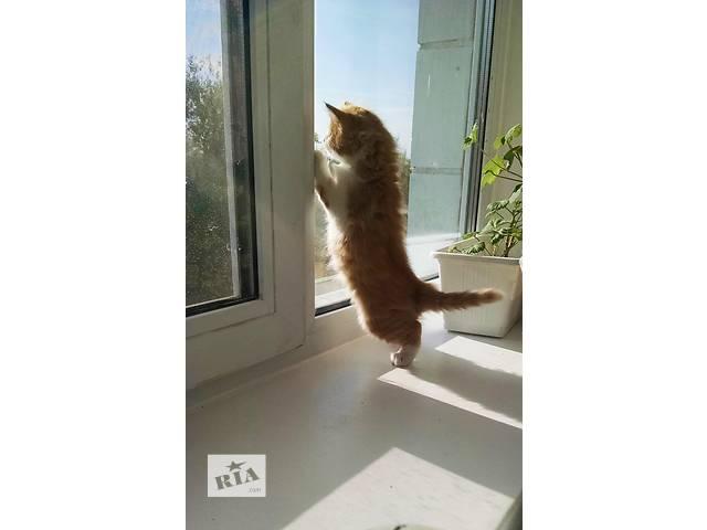Котятки ищут хозяев- объявление о продаже  в Буче (Киевской обл.)