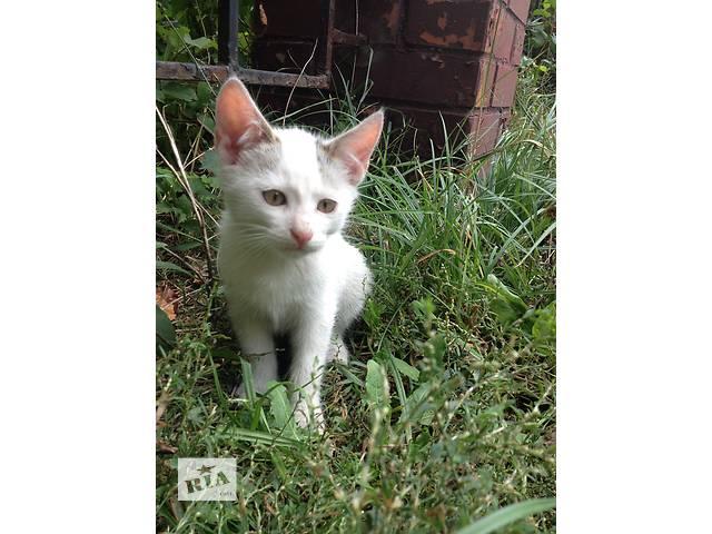 бу Котик 3,5 месяца в Ирпене