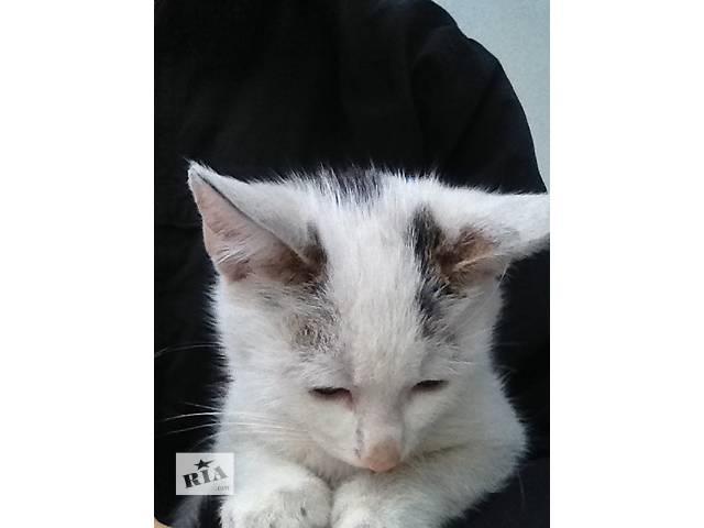 продам Котик 3,5 месяца в добрые руки бу в Ирпене
