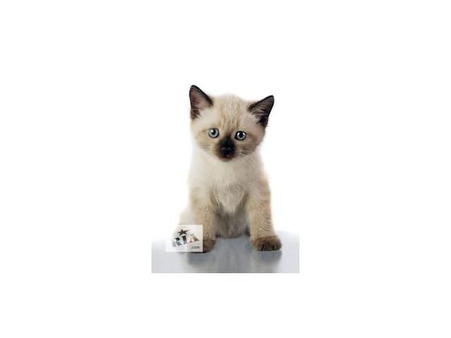 бу котик тестовый в Теребовле