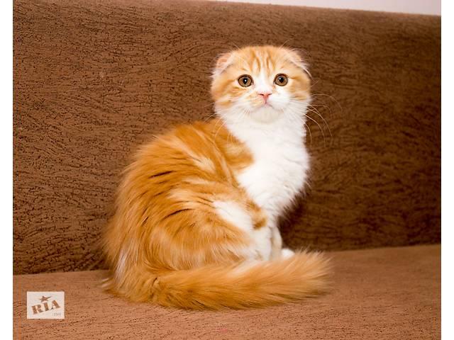 продам Красный мраморный биколор - котик из питомника! бу в Киеве