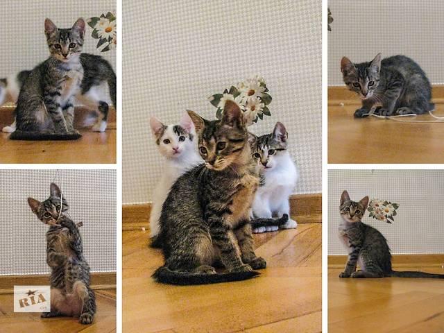 Красивейшие, добрые и воспитанные 3-мес. котята - тому, кто ищет надежного мурлычащего друга!- объявление о продаже  в Киеве