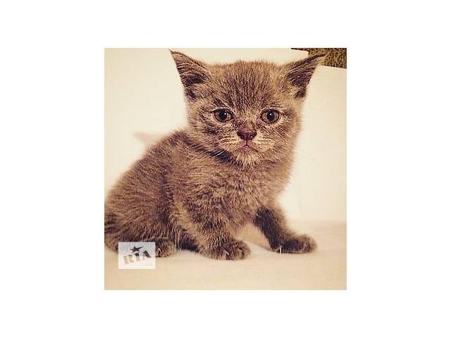 продам Красивейшие  котята  бу в Киеве