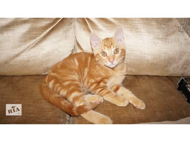 купить бу Красивый котенок в хорошие ручки в Одессе