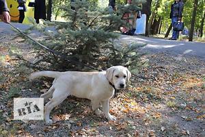бу Собаки, цуценята  в Україні
