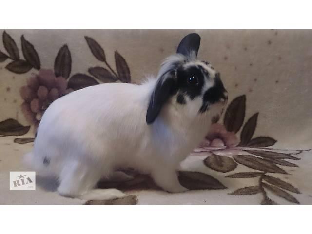 Кролик для вязки- объявление о продаже  в Киеве