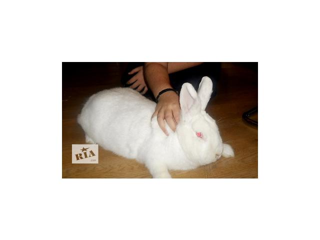 купить бу кролик самочка НЗБ в Харькове