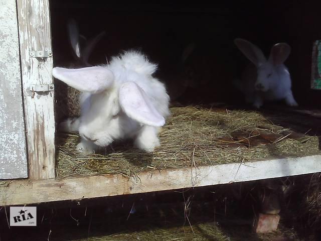 купить бу Кролики крупных пород в Беловодске