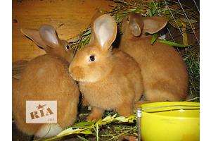 продам Другие животные в Мариуполе бу Мариуполь