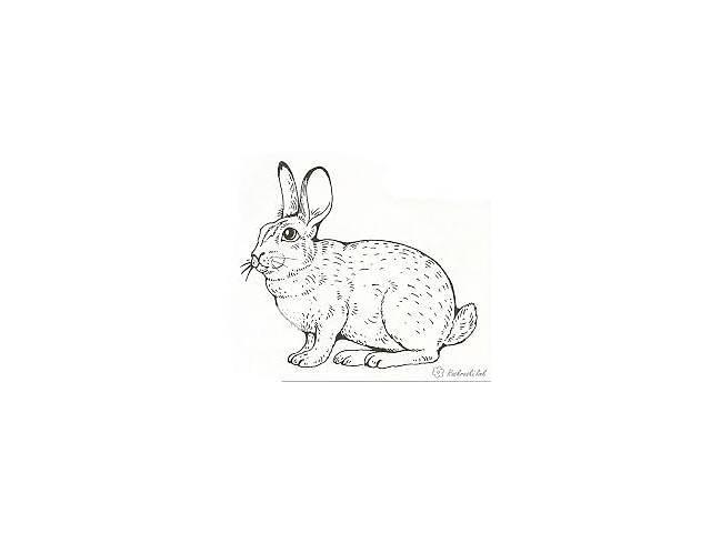 Кролики разных пород Черкассы- объявление о продаже  в Черкассах