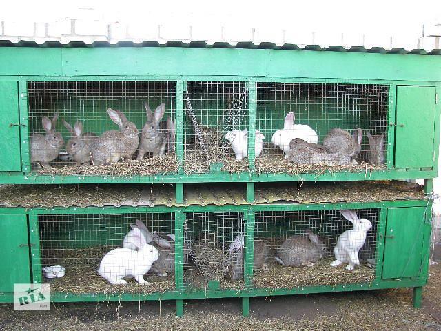 Размеры клеток для кроликов великанов своими руками чертежи