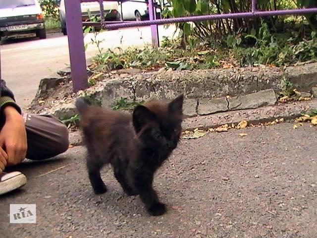 купить бу Крошечный котёнок срочно ищет дом!  в Киеве