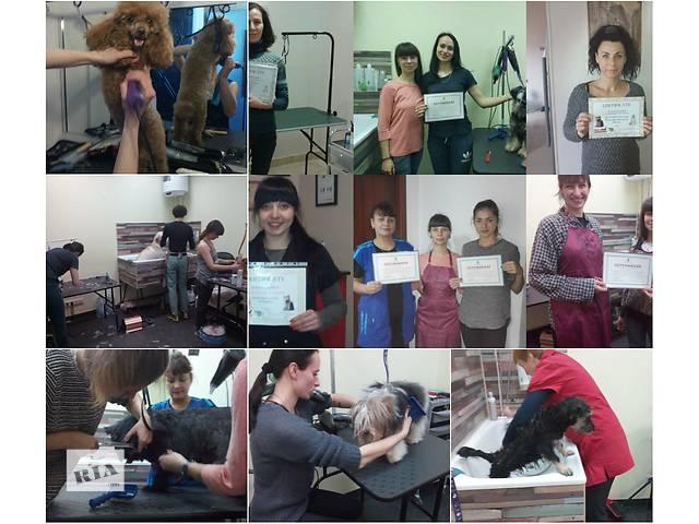 купить бу Курсы груминга. Школа груминга. Обучение стрижке животных  в Украине