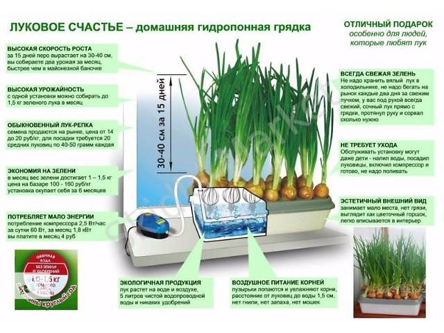 продам Киев.Домашняя гидропонная грядка Луковое Счастье, выращивание лука дома бу в Киеве