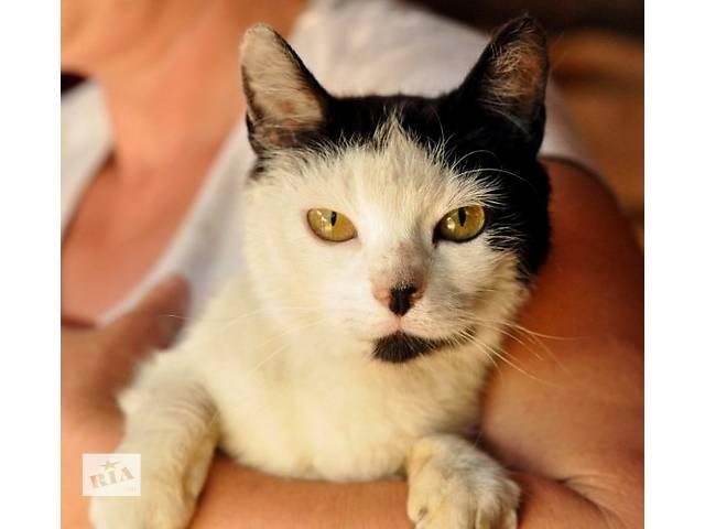 Ласковая кошка в хорошие руки- объявление о продаже  в Киеве