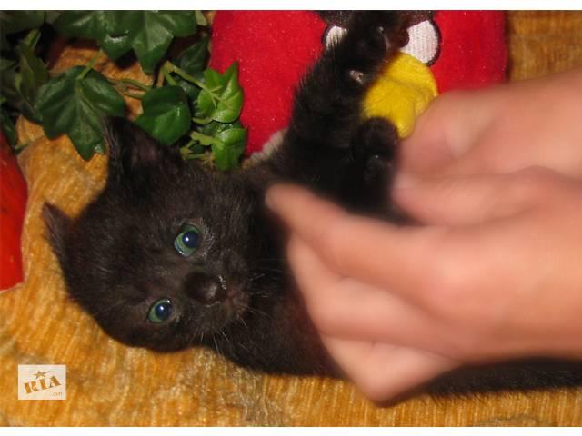 бу Лечебный черный котенок с зелеными глазами Честер Блэк - Черный Принц  в Киеве
