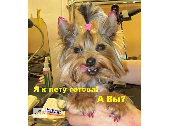 Летние стрижки собакам и кошкам. Уже  давно пора.- объявление о продаже  в Днепре (Днепропетровск)