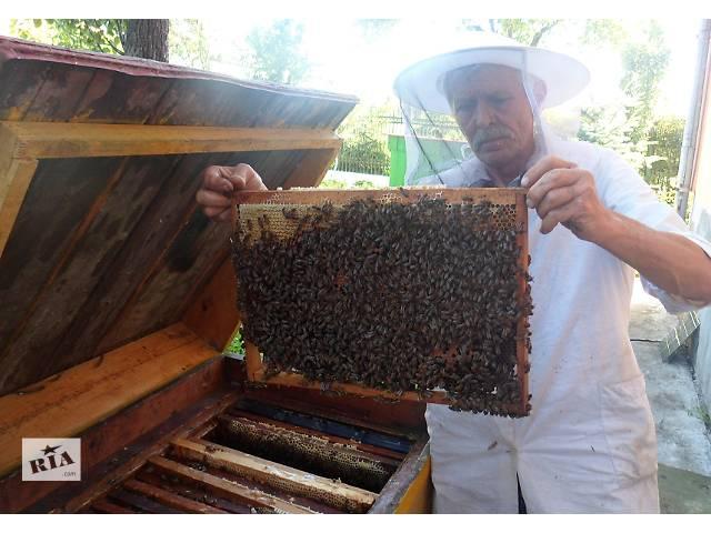 продам Пчелопакеты-Карпатка бу  в Украине