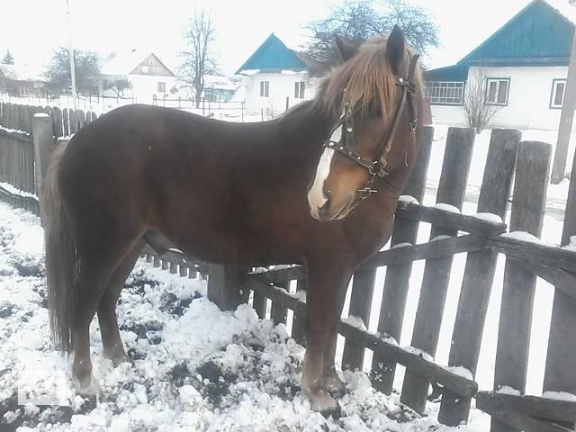 бу Лошадь в Ровно