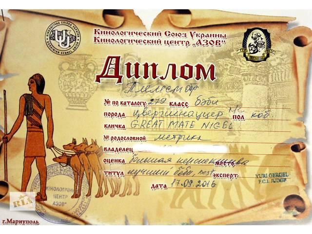 лучшие из шнауцеров  в  семью- объявление о продаже  в Черноморске (Ильичевске)