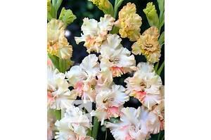 Объявления Комнатные растения, рассада и цветы