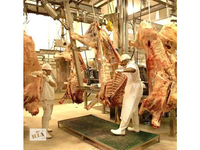 купить бу Линия убоя свиней и крс  в Украине