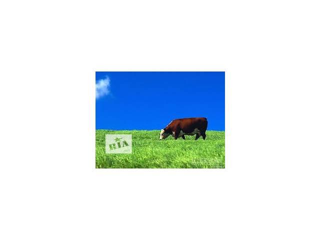 Мясной бизнес- объявление о продаже   в Украине