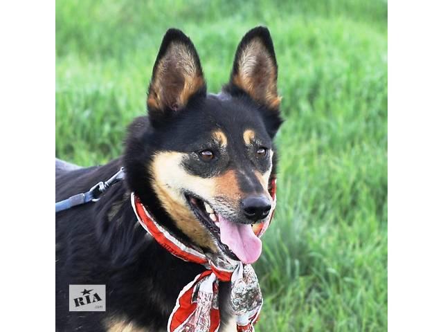 бу Макбет – молодая жизнерадостная собачка ищет заботливую семью. в Киеве