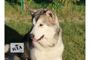 продам Собаки, щенки в Запорожье бу Вся Украина