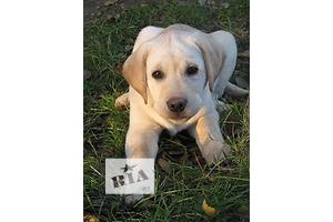 Собаки, щенки в Измаиле - объявление о продаже Вся Украина