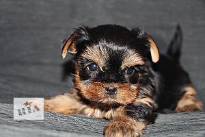 бу Собаки, цуценята в Дніпропетровську Вся Україна