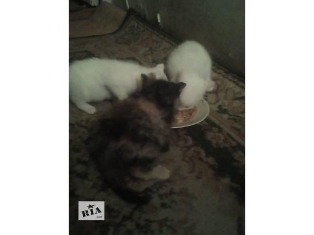 купить бу Маленькие котята ищут семью. в Харькове