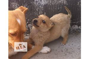 Объявления Собаки, щенки