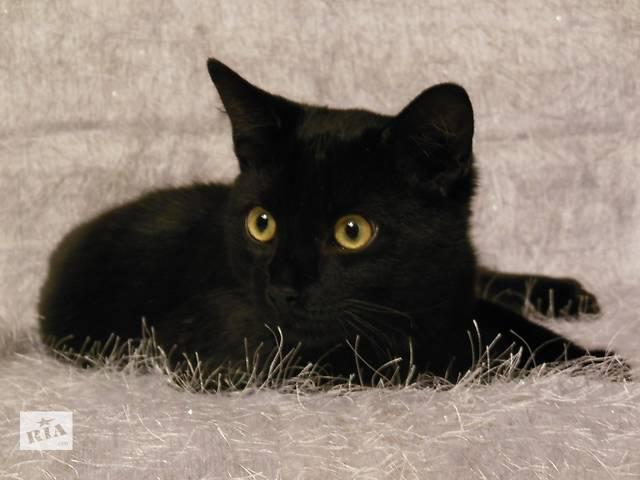 продам Маргуша - черная кошечка, котенок   бу в Донецке