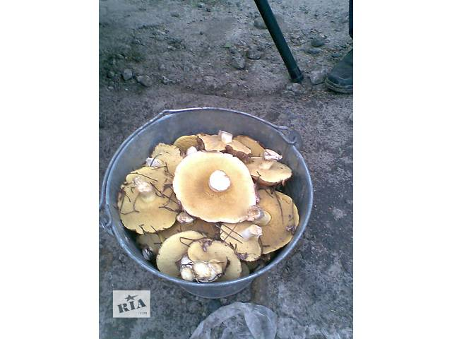 продам Маринованые грибы бу в Запорожье
