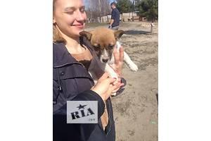Мася, 4 месяца, крошечная собачка
