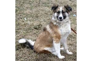Матильдочка - собачка с переломом задней лапки ищет любящую семью!