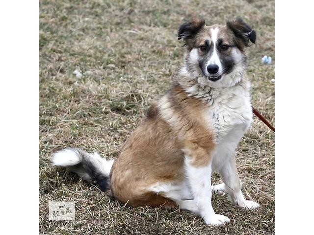 бу Матильдочка - собачка с переломом задней лапки ищет любящую семью! в Киеве