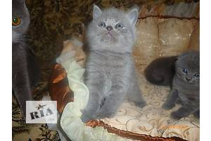 МЕGA-красивые котята во Львове