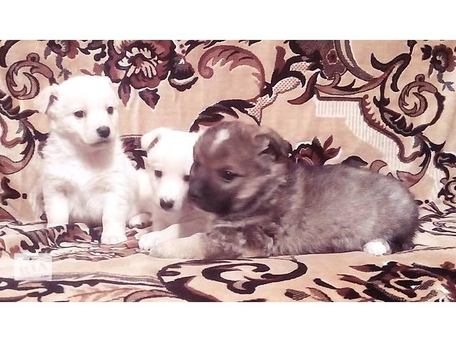 купить бу Мелкие дворовые собачки в Харькове